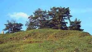 The Pines At Garabandal 2